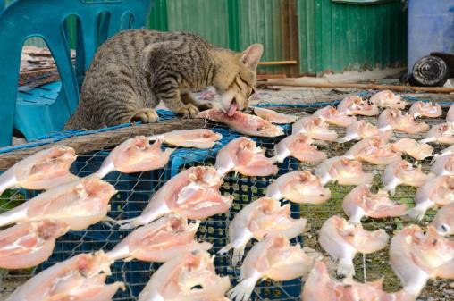 6 Jenis – Jenis Makanan Berbahaya Untuk Kucing Yang Perlu Dihindari