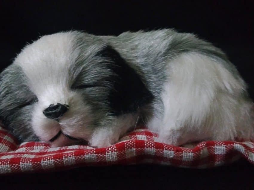 Penyebab Anjing Tidur Terus Yang Perlu Diwaspadai