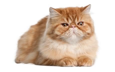6 Cara Menjaga Mood Kucing Agar Baik Yang Benar