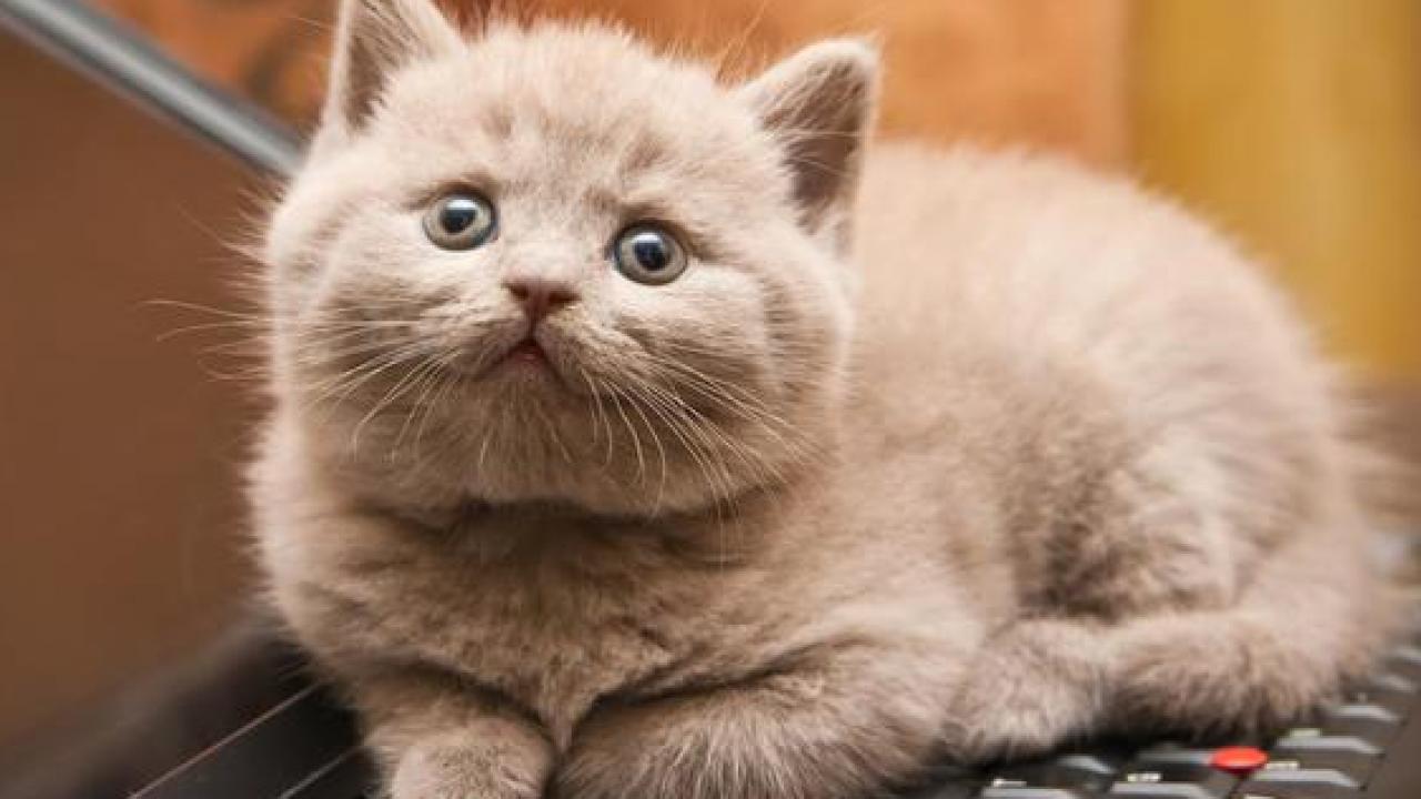 Gambar Kucing Estetik 81021 Nama Untuk Kucing Comel Lucu Dan Unik
