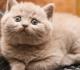 Fungsi Collar Pada Kucing