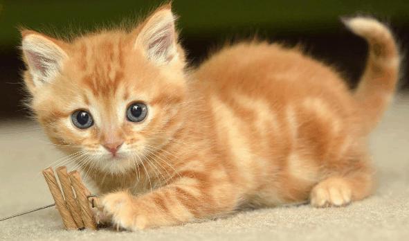 Fungsi Pembuluh Arteri pada Kucing