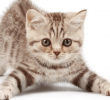 Manfaat Kucing Untuk Lingkungan