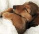 Manfaat Steril Pada Anjing Jantan
