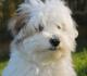 Manfaat Steril pada Anjing Betina