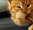 6 Jenis – Jenis Bau Yang Tidak Disukai Kucing Dan Perlu Dihindari