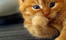 13 Cara Merawat Kucing Hutan Bagi Pemula Arenahewan Com