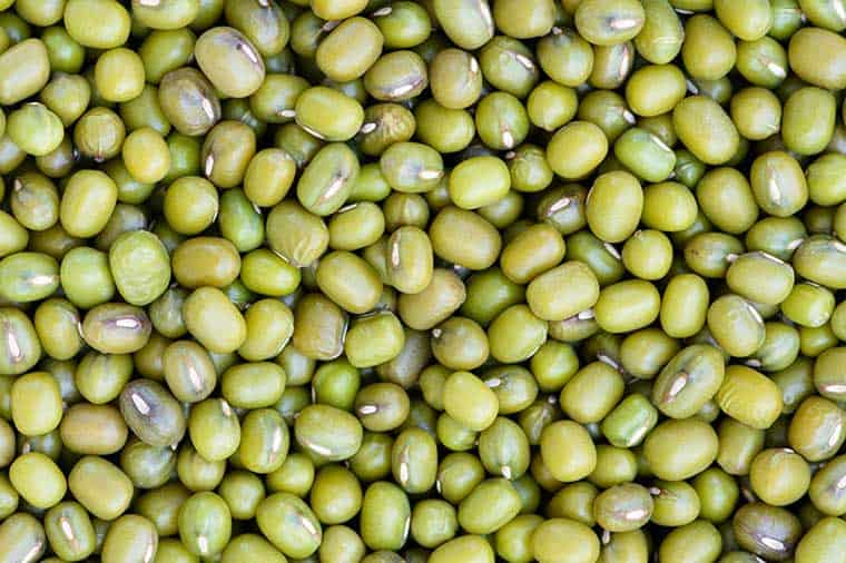 5 Manfaat Kacang Hijau Untuk Lovebird Sebagai Makanan Tambahan