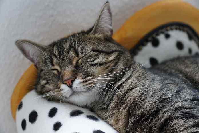 7 Virus Bahaya untuk Kucing