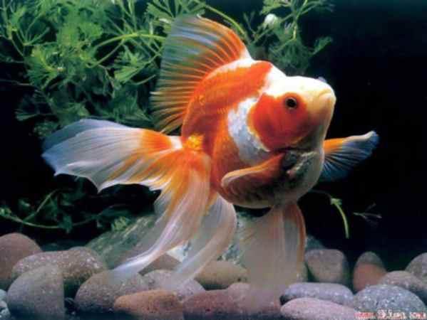 6 Cara Membuat Vitamin Untuk Ikan Hias Yang Efektif