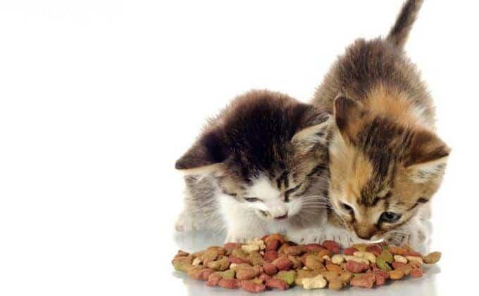 6 Jenis Makanan Berprotein Tinggi Untuk Kucing Yang Baik Bagi Pertumbuhannya
