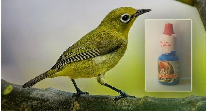 12 Efek Samping Obat Metabolis untuk Burung