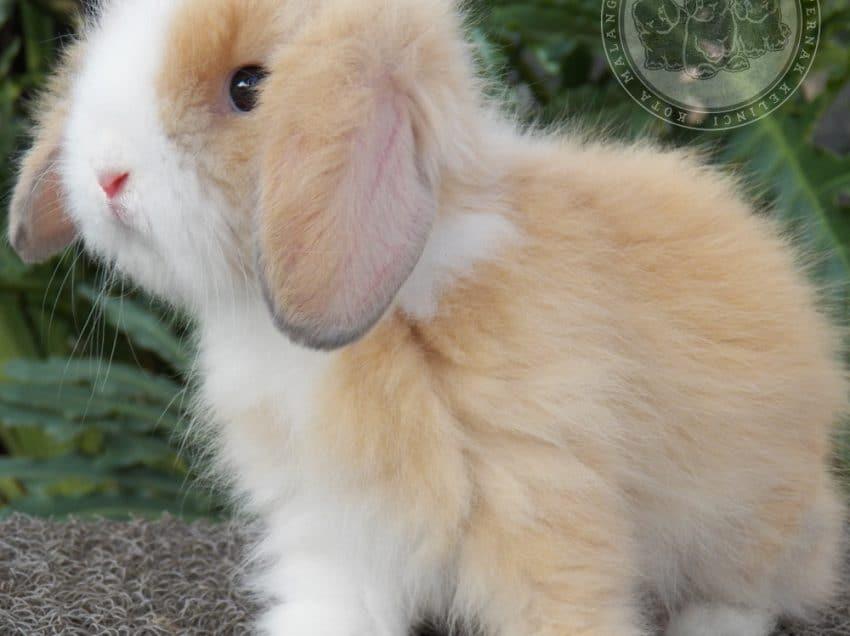 10 Jenis Kelinci yang Aman untuk Anak Anak