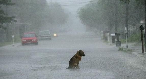 Jenis Penyakit Anjing Di Musim Hujan Yang Patut Diwaspadai