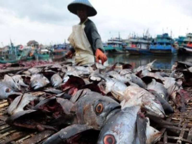 8 Cara Membuat Pupuk Organik Dari Ikan