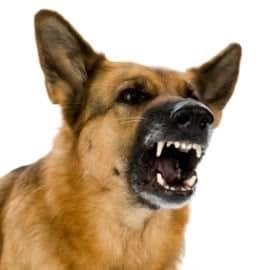 Penyebab Anjing Tidak Mau Menggonggong Yang Perlu Diperhatikan