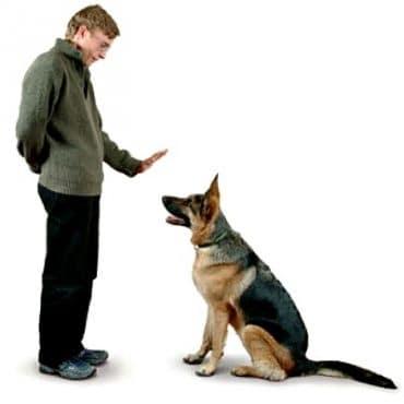 Cara Membuat Anjing Patuh Pada Majikannya Yang Efektif