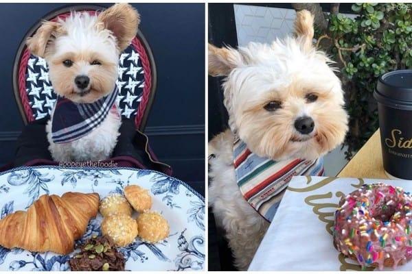13 Jenis Makanan yang Membahayakan Anjing