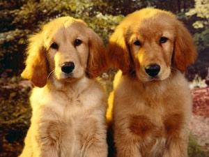 Tanda – Tanda Anjing Sudah Tua Yang Perlu Diperhatikan