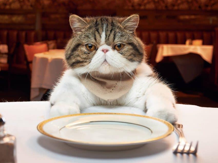13 Jenis Makanan yang Membahayakan Kucing