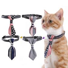 10 Cara Memilih Kalung Kucing yang Baik