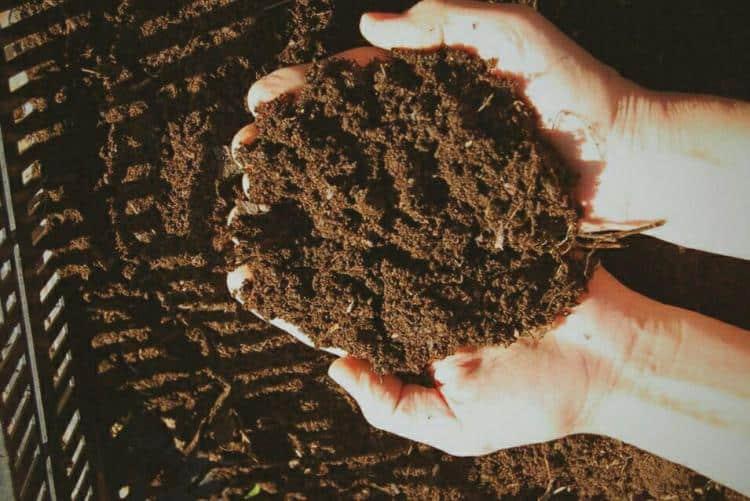 8 Cara Membuat Pupuk Organik dari Kotoran Babi