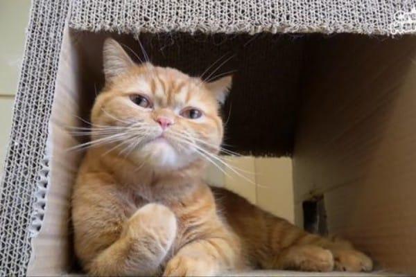 11 Jenis Makanan Kucing untuk Gemuk