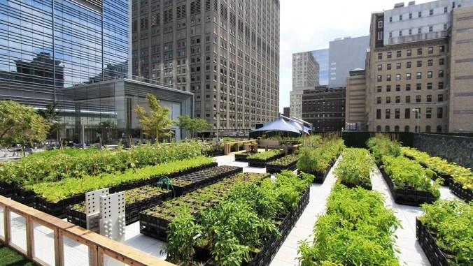 Mengenal Urban Farming Lebih Dekat