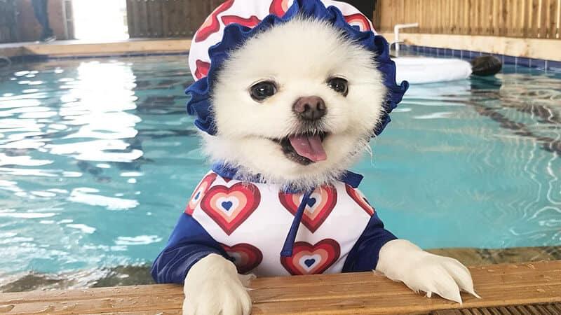 11 Alasan Berenang Baik untuk Anjing