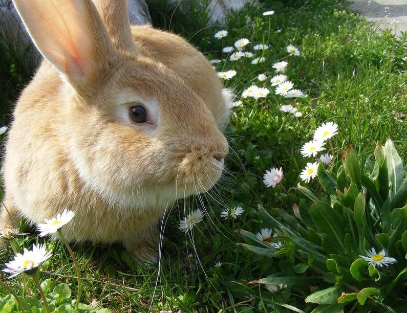 Memang banyak jenis hewan yang bisa dipelihara dirumah 7 Hewan yang Mudah Dipelihara dan Menguntungkan