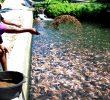 8 Larangan dalam Pemberian Pakan Ikan Lele