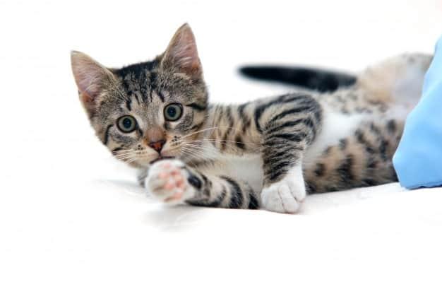 6 Alasan Harus Rutin Bawa Kucing Ke Dokter Yang Perlu Diperhatikan