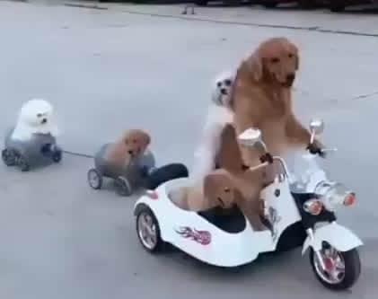 11 Tips Aman Membawa Anjing Bepergian