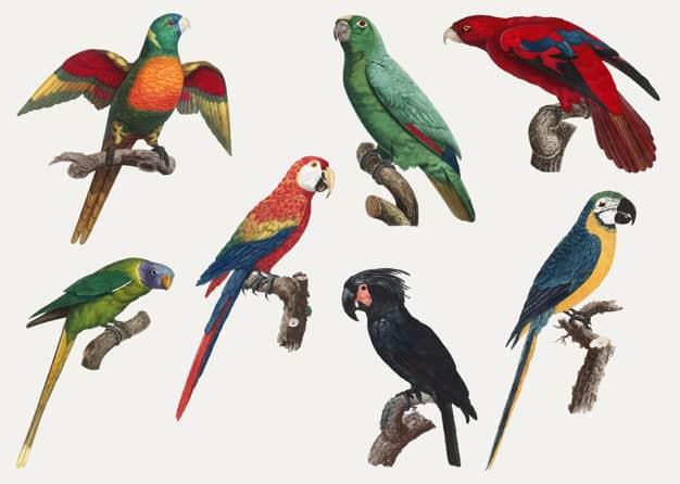 Faktor Utama Penentu Harga Burung Kicau Yang Perlu Dipahami