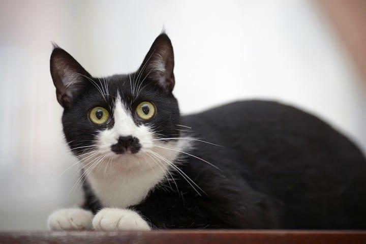 6 Tips Dalam Merawat Mata Kucing Agar Tidak Mudah Mengalami Masalah