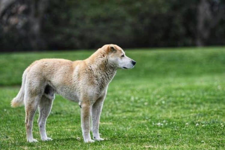 8 Tanda Anjing Trauma yang Bisa Dikenali