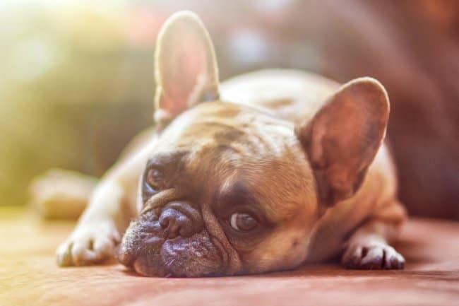 8 Cara Menghitung Umur Anjing Secara Umum dan Mudah