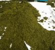 7 Manfaat Fermentasi Pelepah Sawit untuk Pakan Ternak