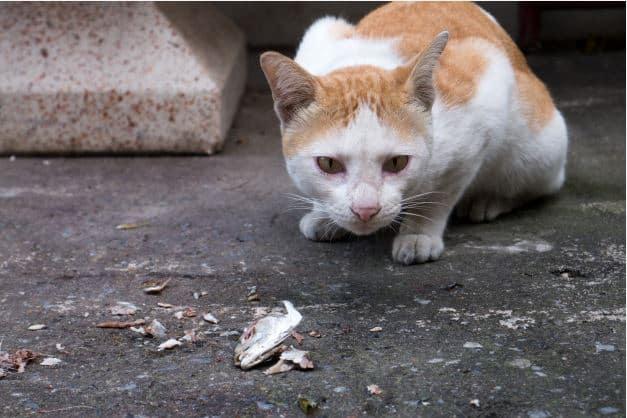 5 Alasan Kenapa Kucing Suka Ikan Yang Belum Banyak Diketahui