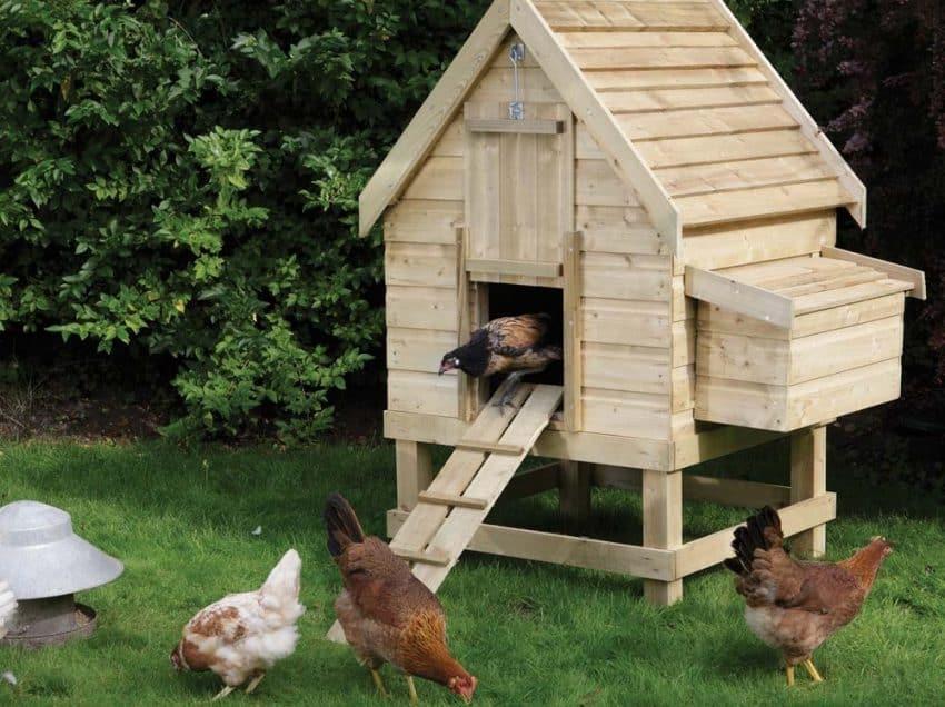 5 Jenis Kandang Untuk Ayam Ras Petelur Yang Dapat Dipilih Peternak