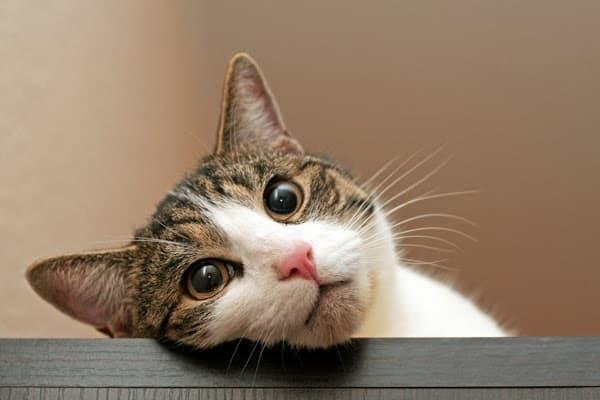Tanda Kucing Gelisah