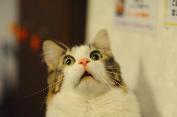 Tanda Kucing Ketakutan