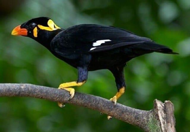 7 Manfaat Jangkrik untuk Burung Beo
