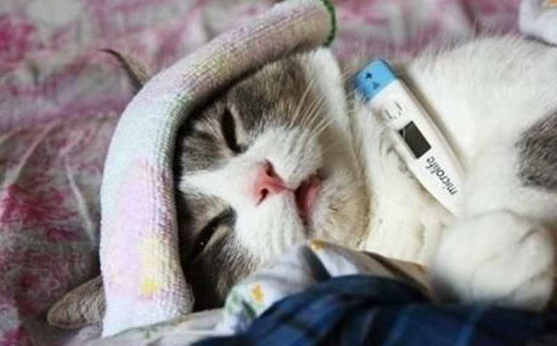 Tanda Kucing Sembuh dari Flu
