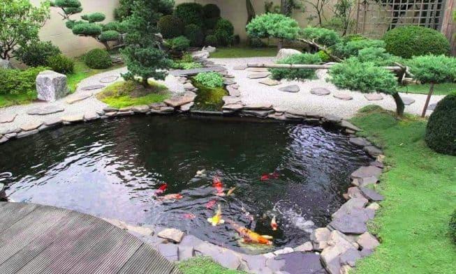 6 Kelebihan Memelihara Ikan Di Kolam Yang Perlu Diperhatikan