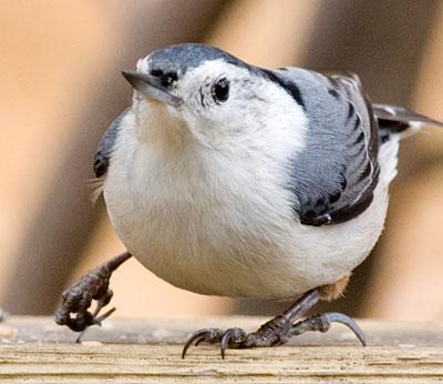 10 Cara Mengobati Kaki Burung yang Patah