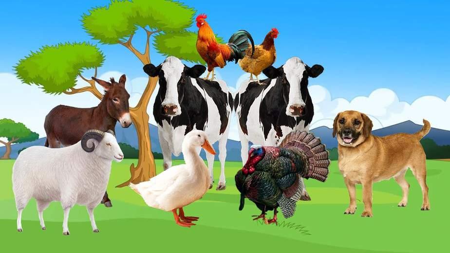 480 Koleksi Gambar Hewan Hewan Ternak Gratis Terbaik
