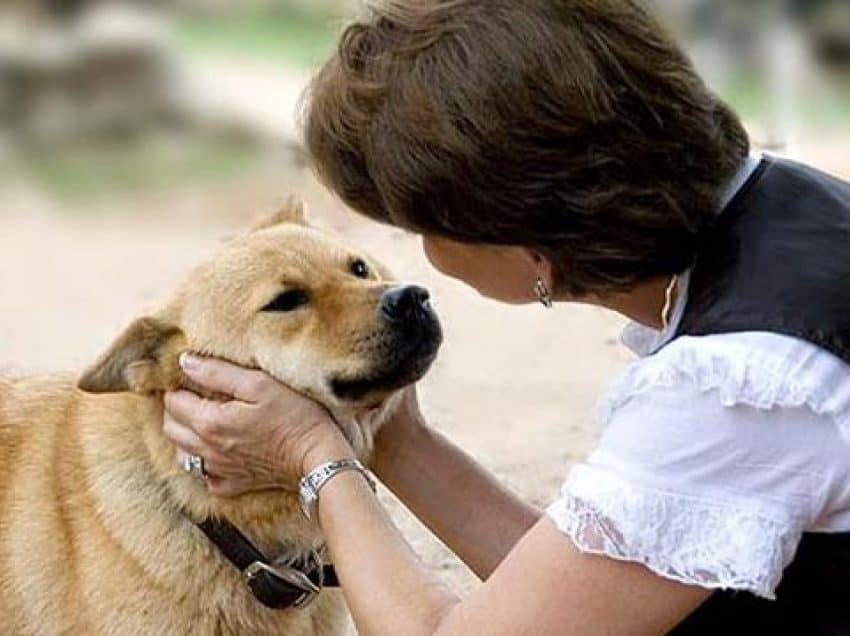 7 Cara Melatih Anjing Kampung Agar Pintar