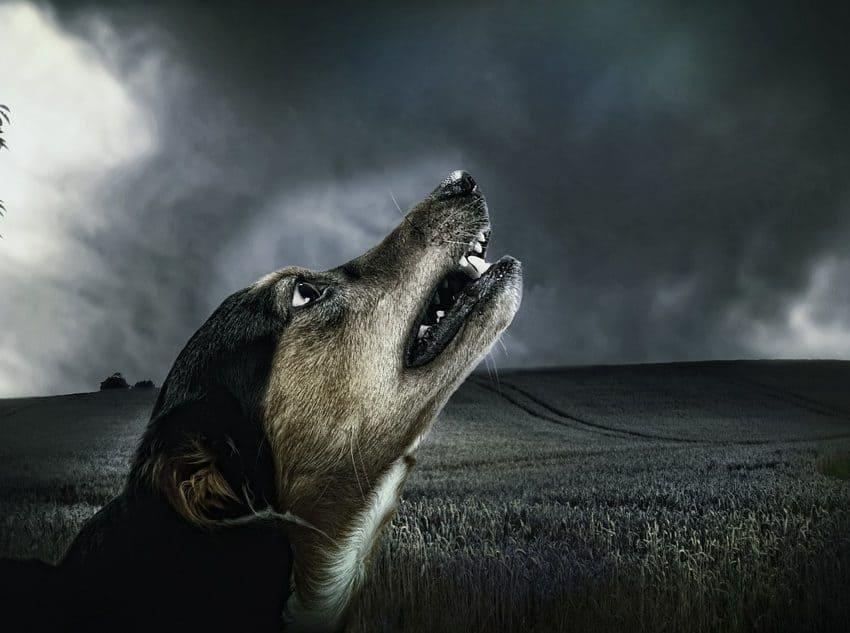 7 Penyebab Anjing Menggonggong Malam Hari