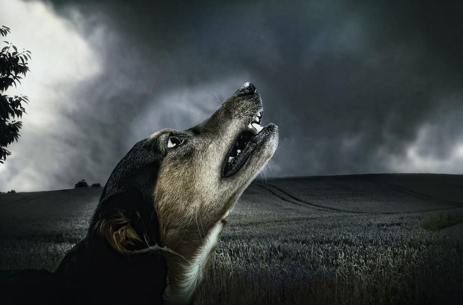 adalah salah satu jenis hewan peliharaan yang banyak di temui 7 Penyebab Anjing Menggonggong Malam Hari